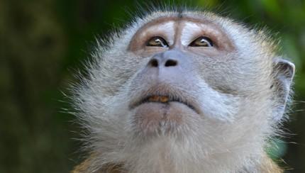 monkey-featured