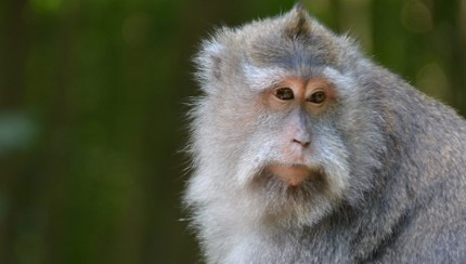 monkey-featured-image