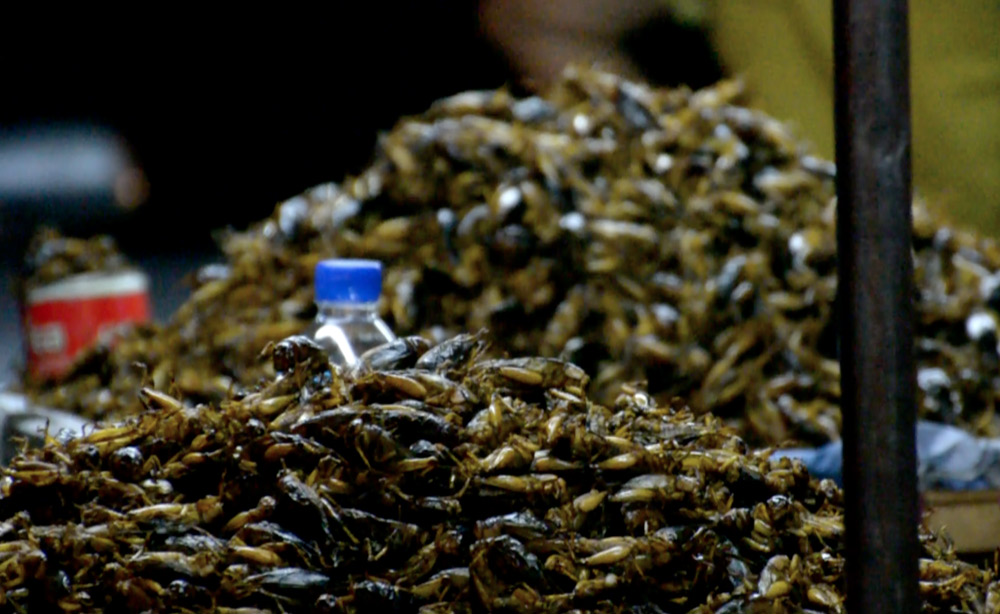 crickets-yangon