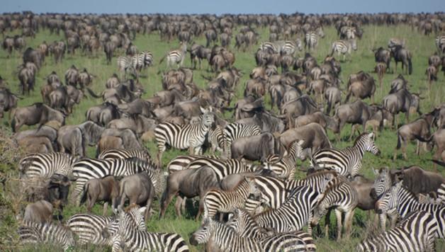 serengeti-featured