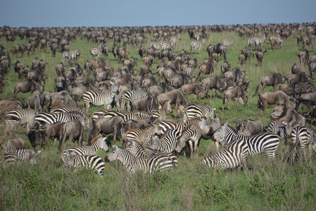 Our view of the Serengeti's Great Migration