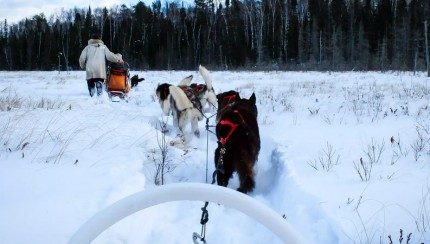 dogsledding-featured