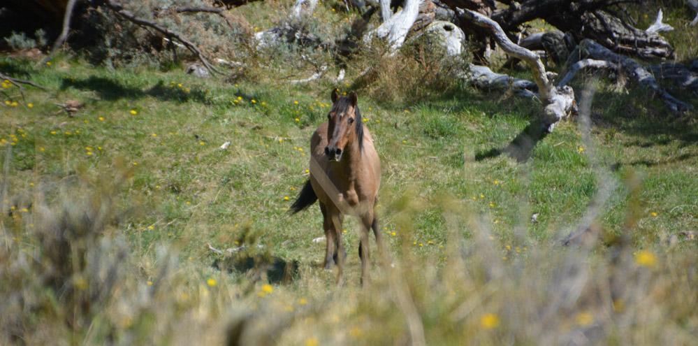 horse-trek-1st-spot