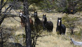 horse-trek-featured-b