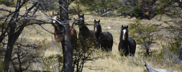 horse-trek-featured-b