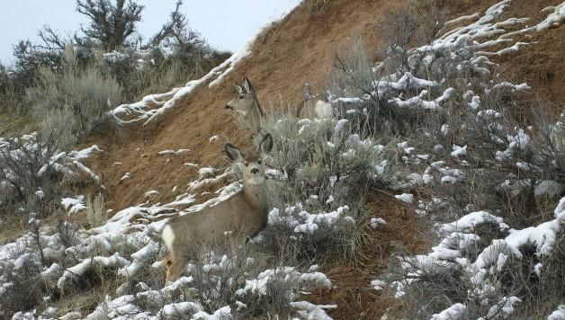 deer-527702_1280